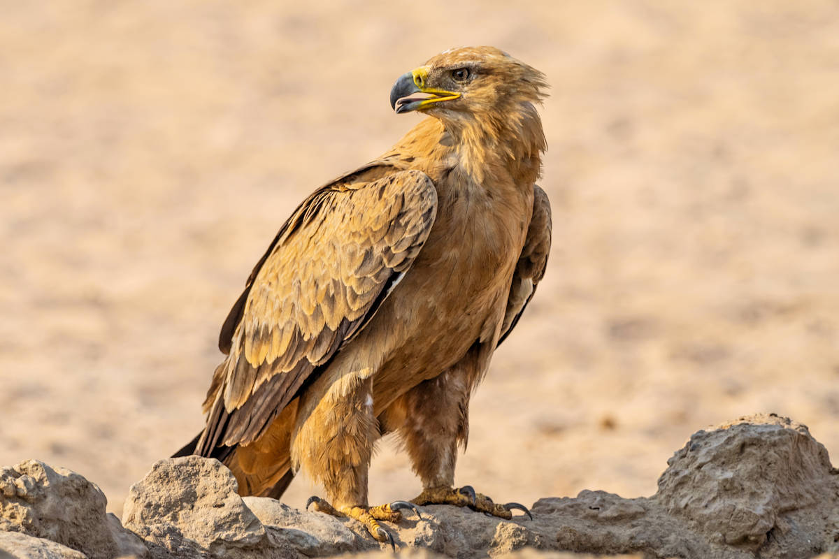Alimentación de los Animales del Desierto