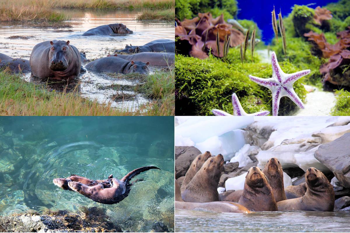 Animales de agua salada y dulce